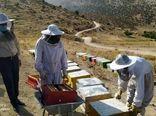 شروع برداشت عسل از زنبورستان های شهرستان ایلام