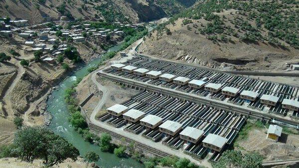 تولید ماهی در مجتمع پرورش دیوزناو سروآباد به ۸۰۰ تُن میرسد