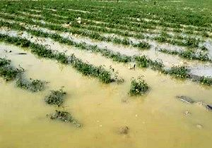 پیشبینی، گام نخست مدیریت اقتصادی سیلاب