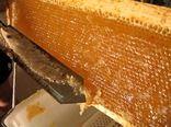 پیش بینی تولید ۲ هزار و ۹۳۱ تن عسل بهاره در خراسان شمالی