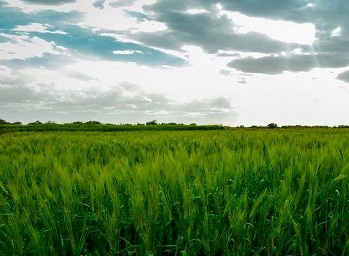 توسعه بسته افزایش عملکرد گندم در استان فارس