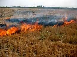 سوزاندن کاه و کلش حاصلخیزی خاک را از بین میبرد/ برداشت 70 درصدی برنج در گلوگاه