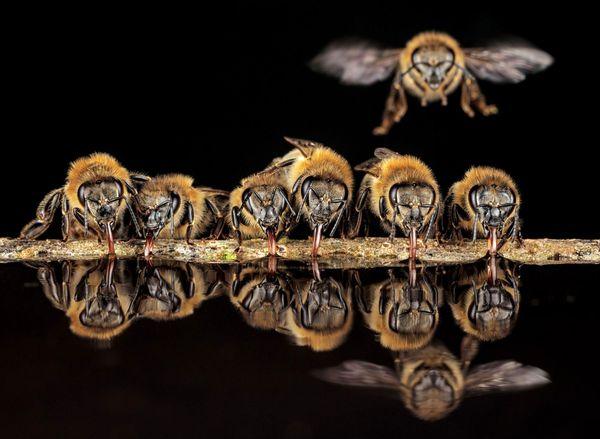 درخواست تامین سهمیه شکر زنبورداران از صمت/ تامین فقط 23 هزار تن از نیاز 100 هزار تنی!