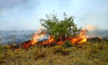 کاهش ۹۰ درصدی حریق منابع طبیعی خراسان شمالی
