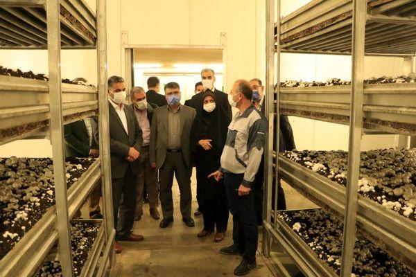 بازدید از یک واحد تولیدی قارچ خوراکی در آبیک