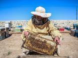 آغاز سرشماری عمومی از زنبورستانهای استان اردبیل