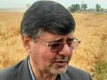 12درصد گندم کشور در گلستان تولید میشود