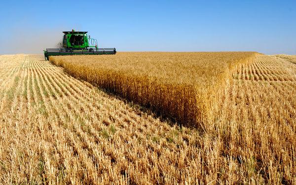 افزایش بازده تولید در استان اول گندم