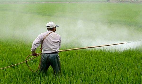 پیشبینی افزایش آلودگی بهاره سن گندم در مزارع شیروان
