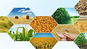 اهمیت و تاثیر امنیت غذایی در امنیت ملی