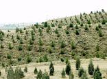 احیای ۸ هزار و ۵۰۰ هکتار از عرصههای منابع طبیعی