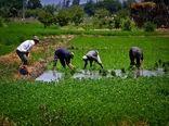 تحقق امنیت غذایی با شیوههای مدرن کشاورزی