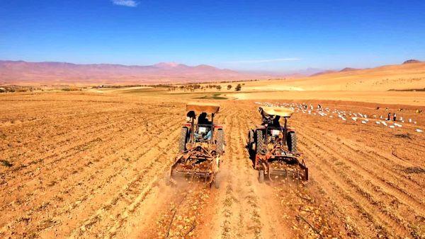 برداشت 58 هزار تن سیبزمینی از مزارع شهرستان شهرکرد