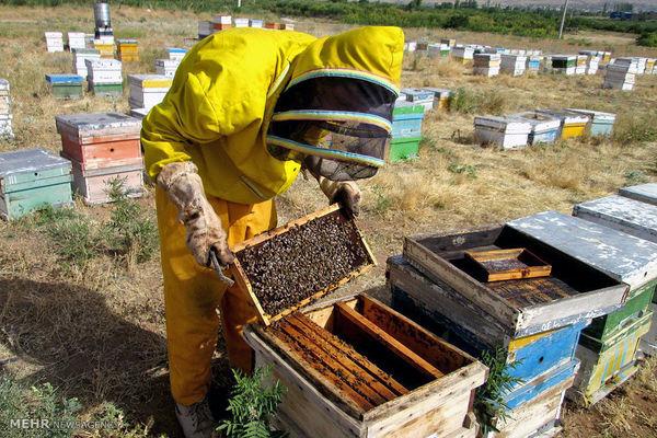 زنبورستانهای 26 شهر استان اردبیل آمارگیری میشوند