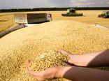96هزار تن گندم در کردستان خرید تضمینی شد