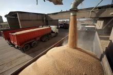 ۱۲ مرکز خرید گندم در بوشهر فعال شد