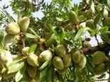 تولید 600 هزار تن محصول باغی در استان کرمان