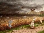 هجوم بیشتر دستجات ملخ صحرایی در سال زراعی پیشرو/ تدارک مبارزه در سطح یک میلیون هکتار زمین کشاورزی