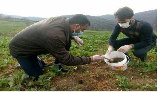 آغاز مبارزه با جوندگان در مزارع کشاورزی شیروان