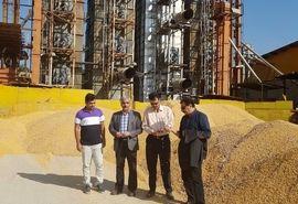 خوزستان با تولید 35 درصد ذرت دانهای در رتبه اول کشور