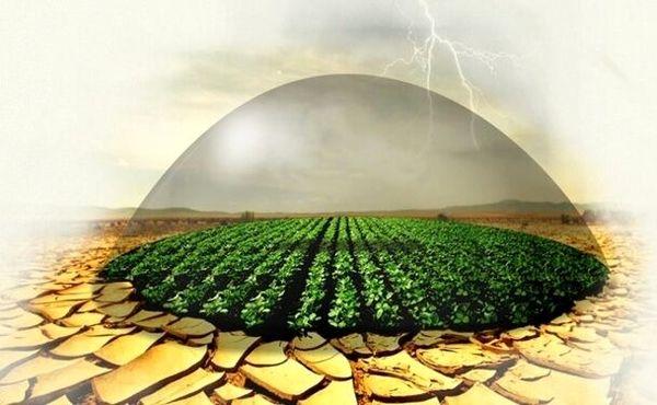 افزایش سطح بیمه انواع محصولات کشاورزی به بیش از 27 هزار هکتار