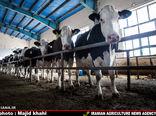 قیمت پایین شیر صرفه تولید را گرفته