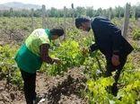 نهضت انتقال دانش به پهنههای کشاورزی توسط 7700 مروج
