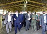 بازدید از مجتمع کشت و صنعت بیدمشک با حضور وزیر جهاد کشاورزی