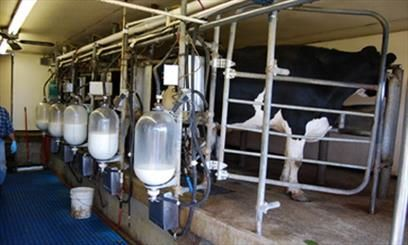 36000 تن شیر در واحدهای دامی شهرستان البرز تولید شد