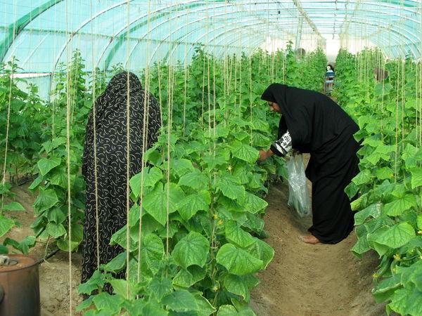 240 میلیارد ریال در بخش کشاورزی شهرستان سراوان سرمایه گذاری شد