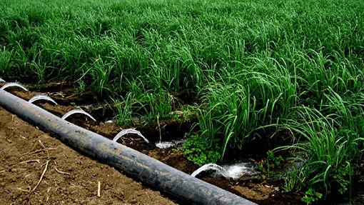 تجهیز 1250 هکتار از اراضی کشاورزی تبریز  به سیستم نوین آبیاری کم فشار