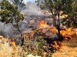 ۳۵ درصد جنگلهای شهرستان اردل مستعد آتشسوزی است
