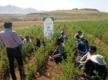 برگزاری چهارمین مرحله آموزش باغداران طرح بزرگ سودجان
