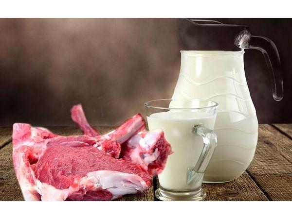 تولید 23 هزار تنی شیر و گوشت قرمز در نوشهر