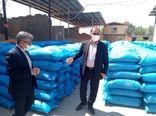 تولید ۲۶ هزار تن بذر گندم آبی و دیم در استان لرستان