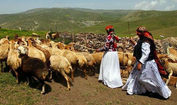 سهم عشایر استان آذربایجان شرقی در تولید ۲۰ درصدی گوشت قرمز