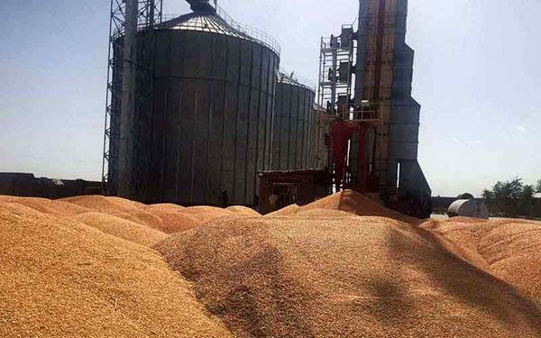 کشاورزان خراسان شمالی ۱۰۲ هزار تن گندم و کلزا به سیلوها تحویل دادند