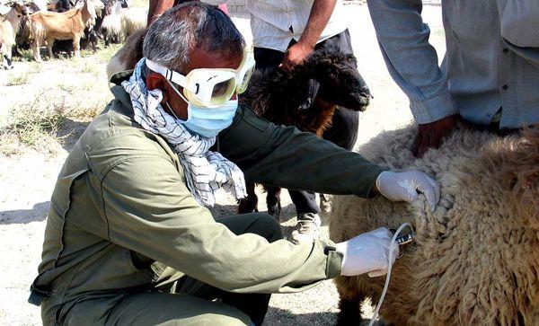 تزریق بیش از 2.5 میلیون دوز واکسنهای دامی در استان تهران