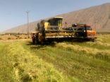 پیشبینی تولید بیش از 2700 تن کلزا در فیروزآباد