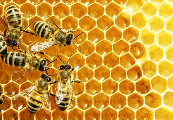 اشتغال دائم و فصلی بیش از 11 هزار نفر در صنعت زنبورداری استان آذربایجان غربی