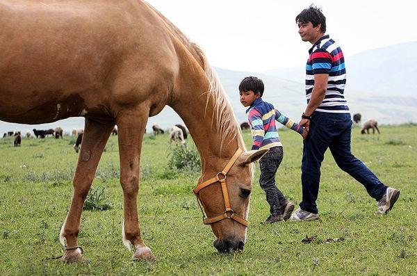 رقابت 300 اسب از کره پای مادر تا سیلمی