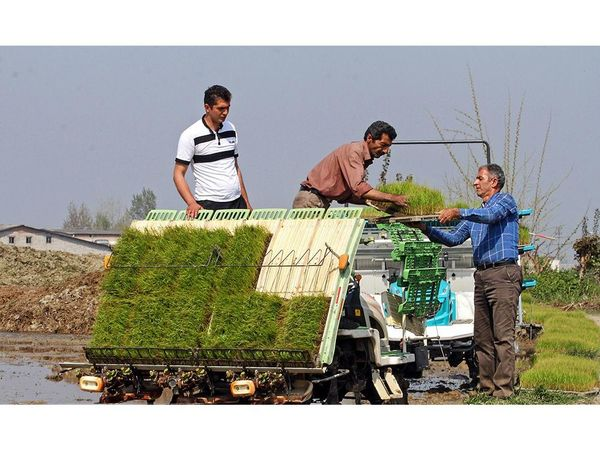 کشت مکانیزه 70 درصدی برنج در نکا