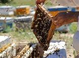 ۱۰۰۰ تن عسل در سال جاری در قزوین تولید میشود 
