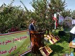 تولید بیش از52 هزار تن انواع محصولات باغی در شهرستان هشترود