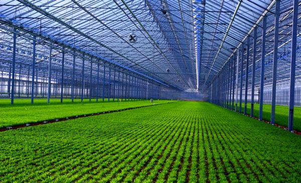 اتحادیهها و تشکلها بازوی توانمند بخش کشاورزی هستند