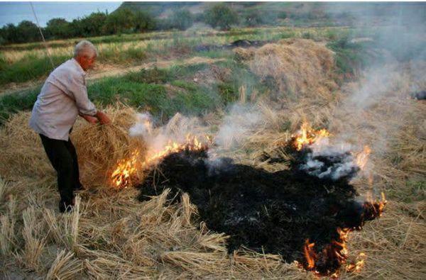 کشاورزان از آتش زدن بقایای گیاهی در مزارع کشاورزی خودداری کنند