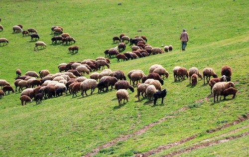 مدیر جهادکشاورزی جاجرم نسبت به ورود دامداران به مراتع هشدار داد