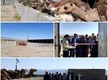 بهره برداری از یک واحد پرواربندی شتر شهرستان نهبندان
