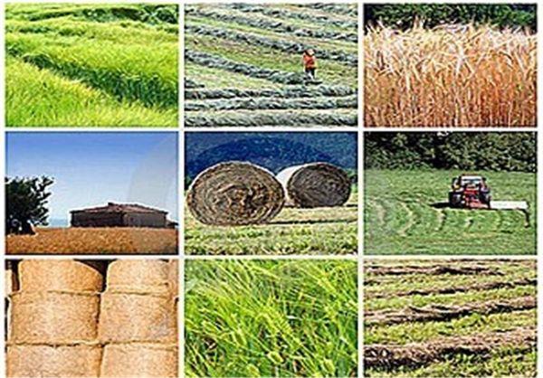 اجرای 7 طرح اقتصادی از محل اشتغال پایدار روستایی