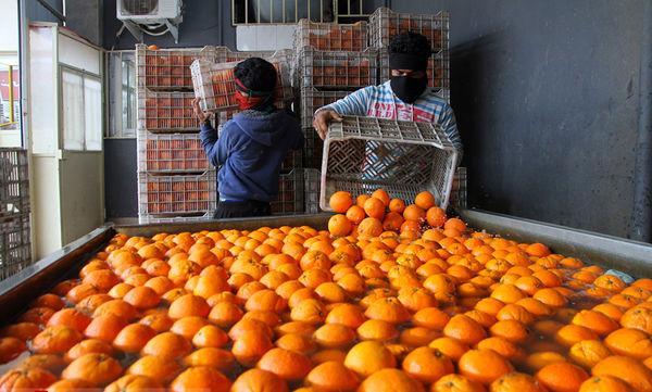 اهوازیها بیشترین مصرفکنندگان سیب و پرتقال نوروزی در خوزستان